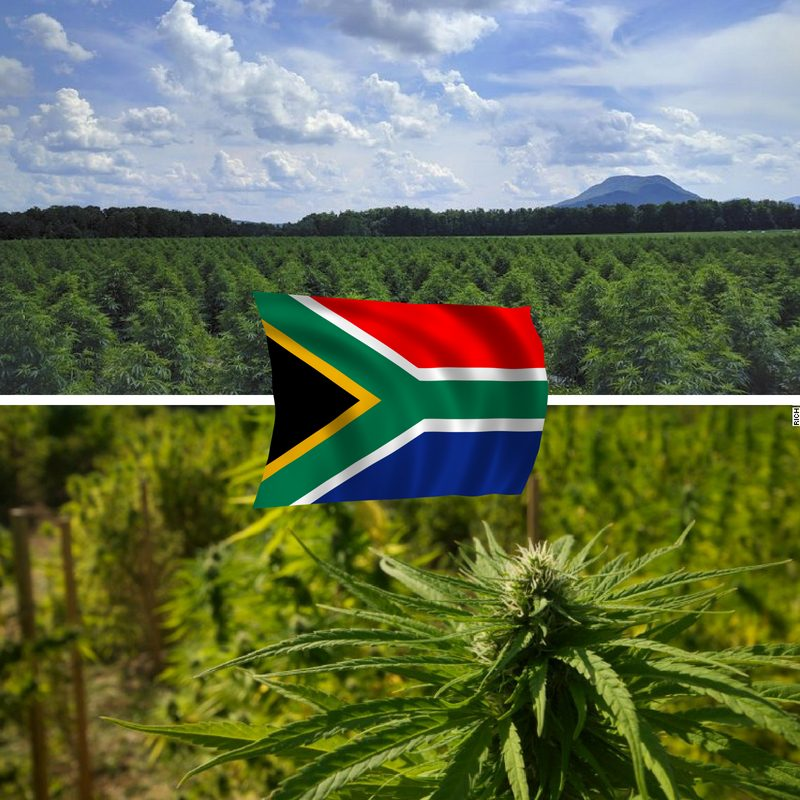 Buy CBD in SA