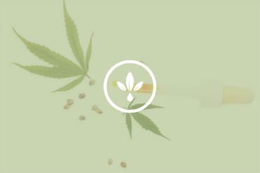 What is the difference between Hemp, Marijuana, and Cannabis?