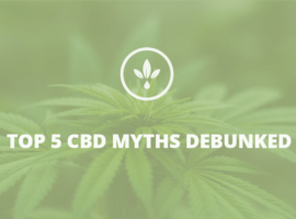 top 5 myths of CBD