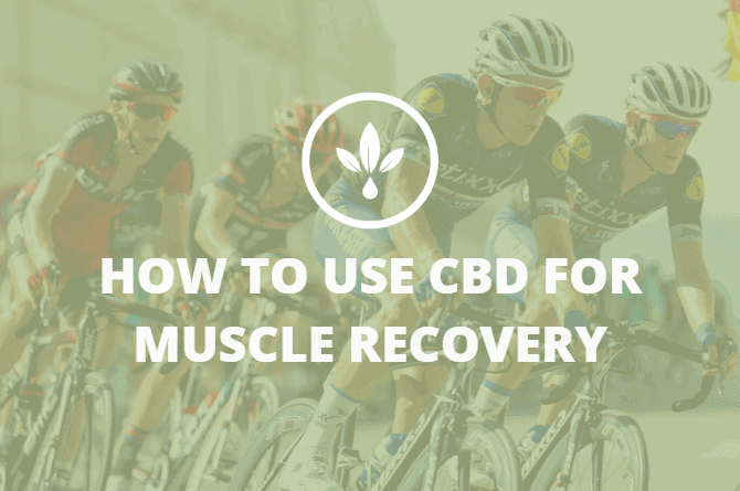 cbd for muscle recovery